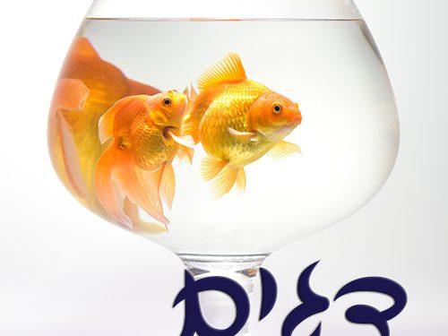 דגים1